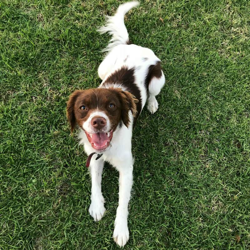 Pets blog